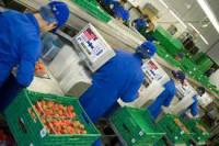 Od zaraz praca w Holandii przy pakowaniu owoców i warzyw Rotterdam