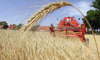 Dam pracę w Holandii dla rolnika w gospodarstwie rolnym od zaraz