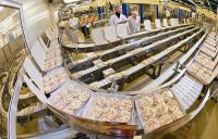 Praca w Holandii na produkcji produktów spożywczych przy pakowaniu
