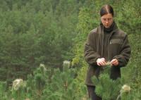 Praca Szwecja od zaraz w leśnictwie przy zbiorach sadzonek bez języka