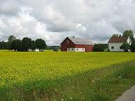 Dania praca fizyczna na farmie przy hodowli norek bez znajomości języka