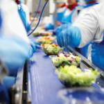 Dam pracę w Holandii na produkcji sałatek przy taśmie Hoorn