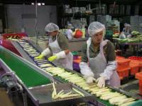 Praca w Norwegii na produkcji przy pakowaniu warzyw bez języka Bergen