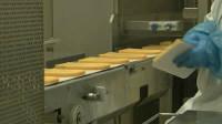 Dam pracę w Holandii na produkcji serów bez znajomości języka Zeewolde