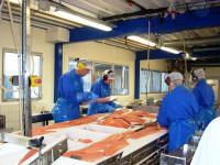 Praca w Danii dla Polaków na produkcji rybnej bez znajomości języka