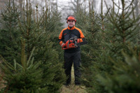 Oferta pracy w Norwegii w leśnictwie przy choinkach bez języka Kongsvinger