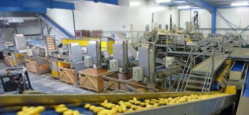 Dania praca na produkcji przy sortowaniu ziemniaków bez języka Ribe | Oferty praca za granicą ...