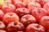 Praca Niemcy od zaraz dla par przy zbiorach jabłek bez języka Pasewalk