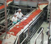 Praca w Holandii na produkcji przy pakowaniu spożywczym od zaraz Rotterdam
