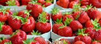 Szwecja praca sezonowa 2015 przy zbiorach owoców dla par bez języka Motala