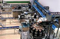 Oferta pracy w Niemczech od zaraz bez języka na produkcji mrożonek Hamburg