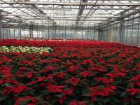 Dam sezonową pracę w Holandii Ogrodnictwo, Szklarnie bez doświadczenia