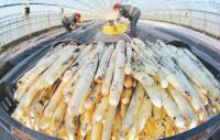 Niemcy praca sezonowa dla Polaków przy zbiorach warzyw-szparagów
