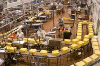 Dam pracę w Anglii dla kobiet na produkcji sera od zaraz w Londynie