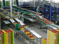 Pakowanie owoców Niemcy praca od zaraz bez znajomości języka Rostock