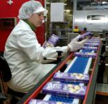 Praca w Danii dla kobiet bez języka przy pakowaniu słodyczy Kopenhaga