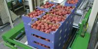 Bez języka praca w Holandii przy pakowaniu owoców Rotterdam od zaraz