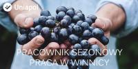 Sezonowa praca we Francji w winnicy 2015