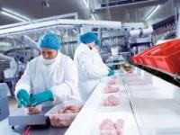 Anglia praca na produkcji przy kurczakach od zaraz Warrington