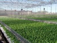 Oferta pracy w Niemczech przy zbiorach warzyw od zaraz bez języka Drezno