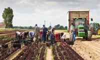 Oferta sezonowej pracy w Szwecji w rolnictwie przy zbiorach pora bez języka