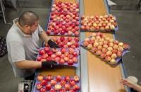 Praca Niemcy bez znajomości języka dla par pakowanie owoców Frankfurt