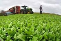 Dam sezonową pracę w Danii w rolnictwie z j. angielskim