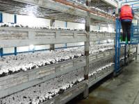 Praca w Holandii przy pieczarkach – zbiory i hodowla Wernhout