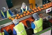 Od zaraz fizyczna praca Szwecja przy pakowaniu warzyw Malmö bez języka