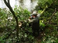 Dania praca sezonowa przy wycince drzew od zaraz bez znajomości języka