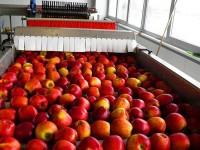 Od zaraz praca Holandia bez języka w Eindhoven przy pakowaniu owoców i warzyw
