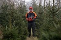 Dam sezonową pracę w Danii leśnictwo bez języka ścinanie i sortowanie Vejle