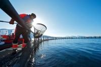 Fizyczna praca Norwegia bez znajomości języka od zaraz Horten farma rybna