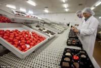 Praca Anglia przy pakowaniu czekoladek Luton od zaraz bez znajomości języka
