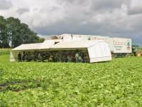 Od zaraz Anglia praca sezonowa bez języka zbiory warzyw Lincolnshire