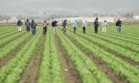 Oferta sezonowej pracy Anglia zbiór warzyw od zaraz Rainford bez języka