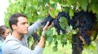Dam sezonową pracę w Niemczech zbiory winogron Koblencja bez języka