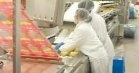 Oferta pracy w Anglii przy pakowaniu sera od zaraz bez języka Liverpool