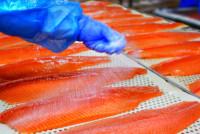 Oferta pracy w Danii na produkcji rybnej w roku 2017 (z językiem angielskim)