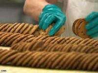 Bez znajomości języka dam pracę w Holandii od zaraz produkcja ciastek Maastricht