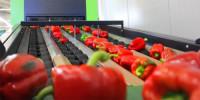Oferta pracy w Norwegii bez znajomości przy pakowaniu warzyw od zaraz Moss