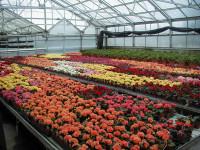 Holandia praca dla par w ogrodnictwie od zaraz bez języka przy kwiatach Vlissingen