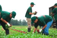 Pielęgnacja i zbiór warzyw dam sezonową pracę w Szwecji od zaraz, Kristianstad