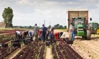Oferta sezonowa pracy w Niemczech w rolnictwie – Ingolstadt 2017