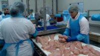 Pakowanie drobiu – praca w Holandii ze znajomością angielskiego, Venlo