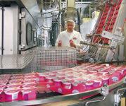Holandia praca produkcja jogurtów ze znajomością języka angielskiego, Limburgia