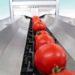 sortowanie warzyw pomidory