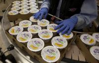 Oferta pracy w Holandii z językiem angielskim produkcja jogurtów typu greckiego, Schimmert