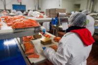 Praca Dania bez języka na produkcji w przetwórni rybnej od zaraz 2018