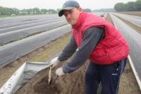 Sezonowa praca w Niemczech bez znajomości języka zbiory szparagów 2019 Neuwarendorf